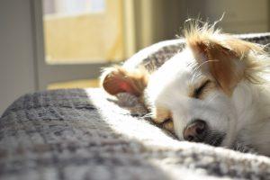 Overlooked Estate Planning Details: Pet Planning